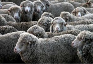 Que es la lana merino. Perder el rumbo.