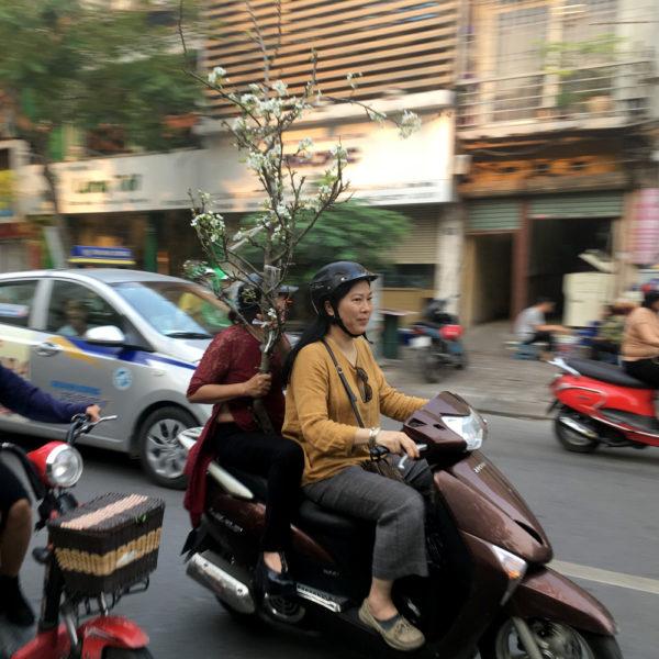 Dos chicas en una moto, una lleva un pequeño arbusto. Motos en Asia.