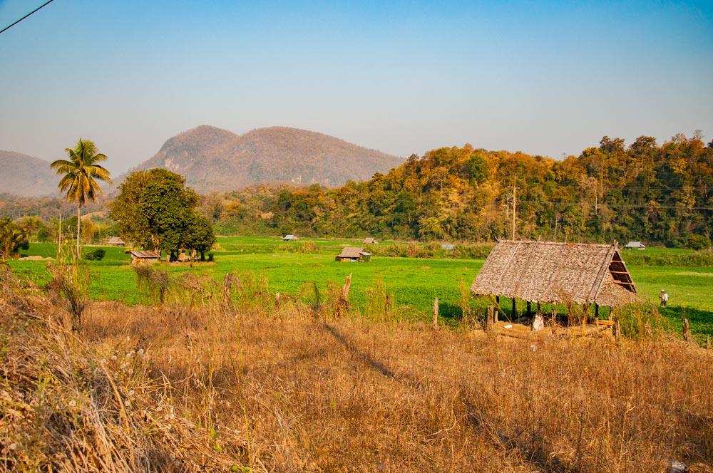 Verdes campos de arroz rodeados de árboles y montañas. Mae Hong Son, la ciudad de la niebla.