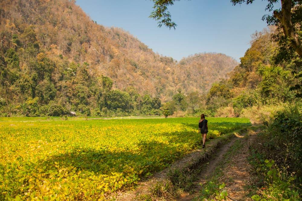 Paseando por campos de cultivo en Mae Hong Son