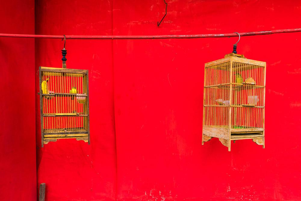 Dos jaulas con pajaritos y de fondo una pared roja perteneciente a las casas de colores del Río Code. Yogyakarta