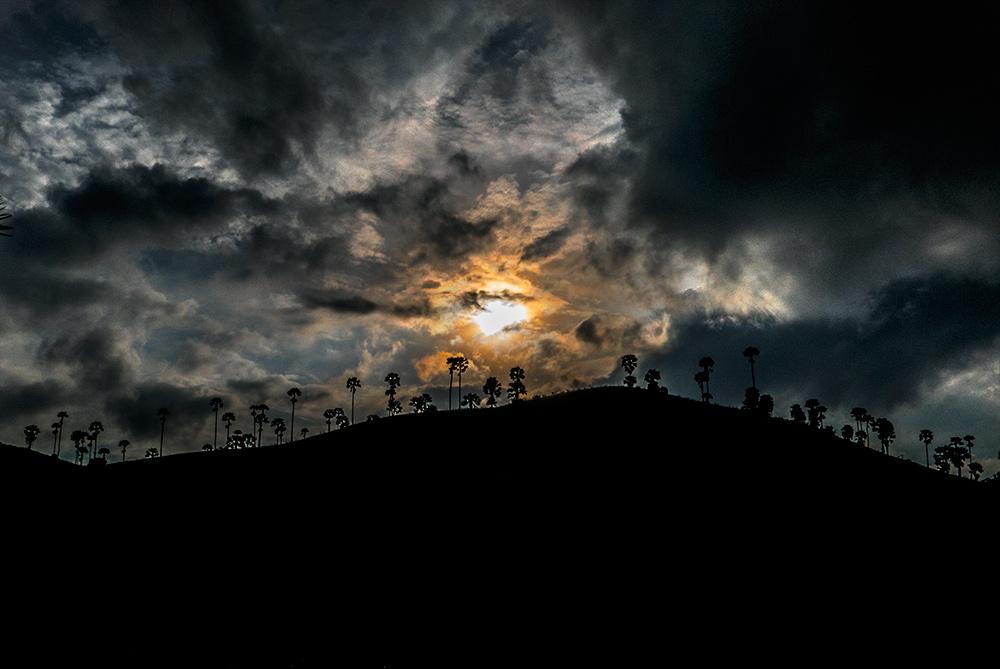 Silueta de unas palmeras con el sol entre las nubes.