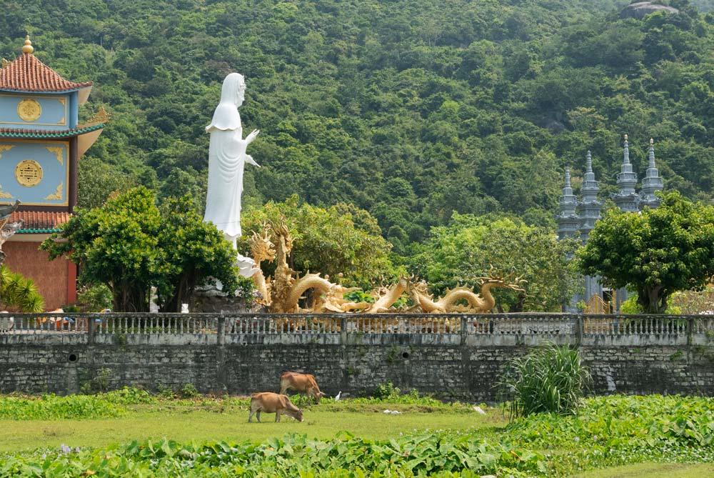 Gran estatua en en un templo rodeado de vegetación y vacas. Islas Cham