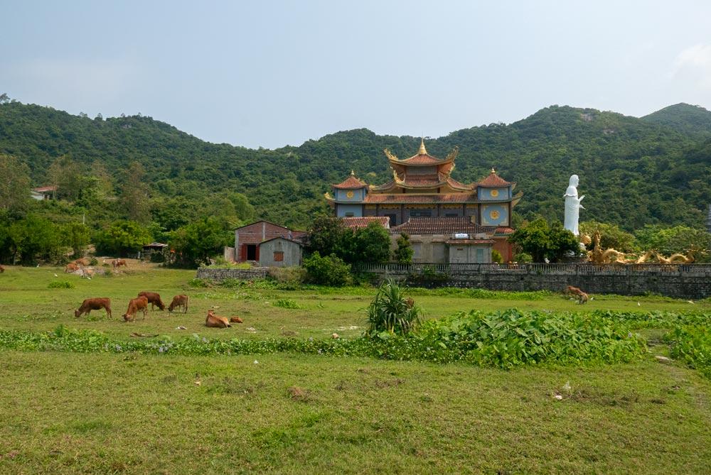 Paisaje verde con vacas y un templo al fondo con una gran estatua blanca y adornos dorados. Islas Cham
