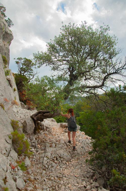 Chica ascendiendo por un rocoso camino hacia el monte tíscali. Se agarra a un árbol para facilitar la subida. Golfo de Orosei. Cerdeña