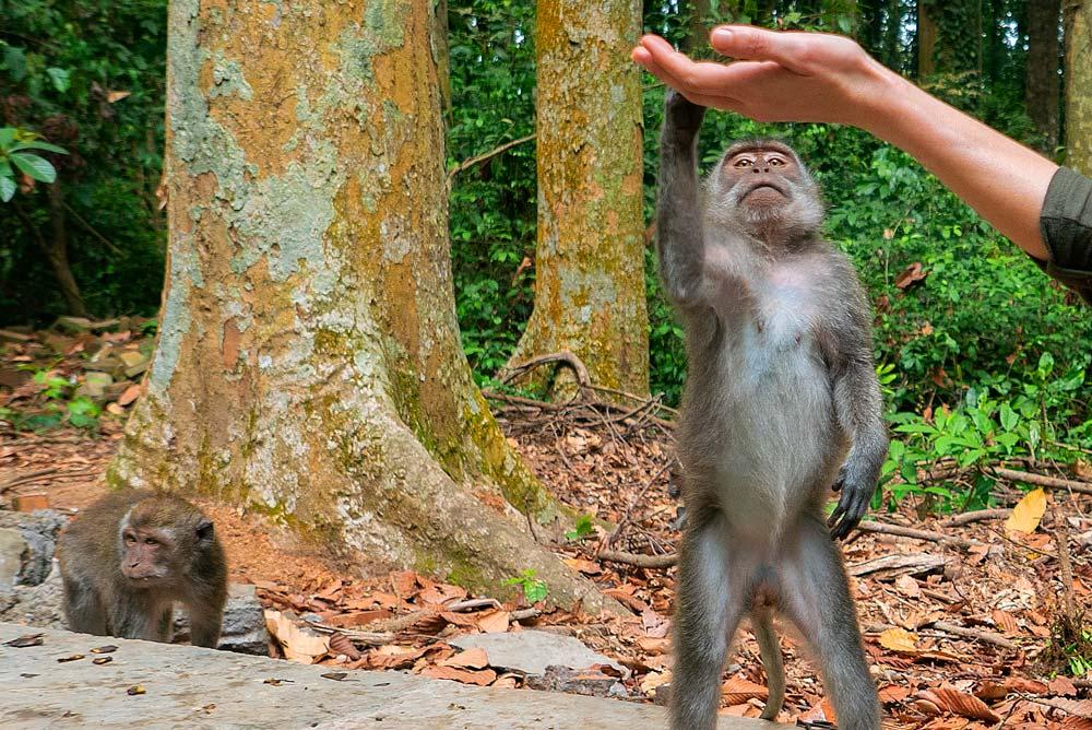 Mono cogiendo fruta de una mano. Vacunas para viajar