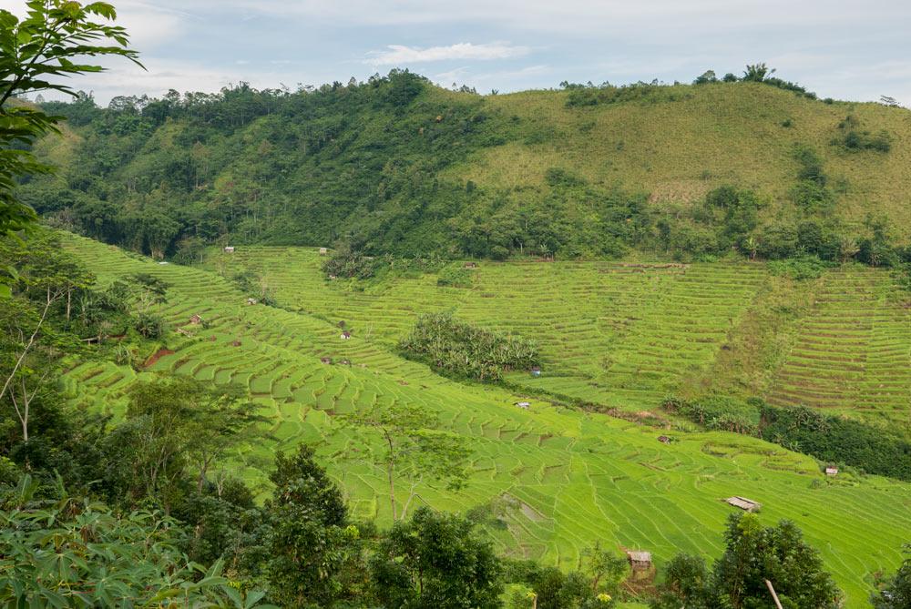 Vista de los arrozales en terraza en la ruta hacia Ruteng. RUTA ISLA DE FLORES. INDONESIA. VIAJE EN MOTO 5 ETAPAS