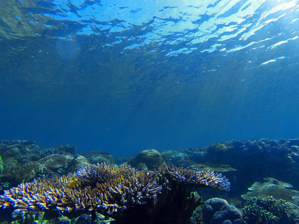 Corales de mil colores. Buceo en Raja Ampat. Papúa. Indonesia