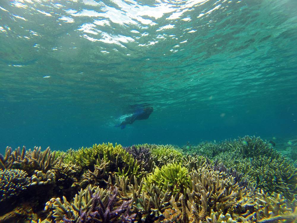 Aguas en calma repletas de corales. Buceo en Raja Ampat. Papúa. Indonesia