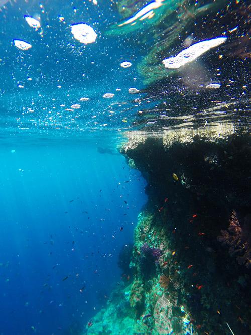 Inmersión en pared de corales. Buceo en Raja Ampat. Papúa. Indonesia