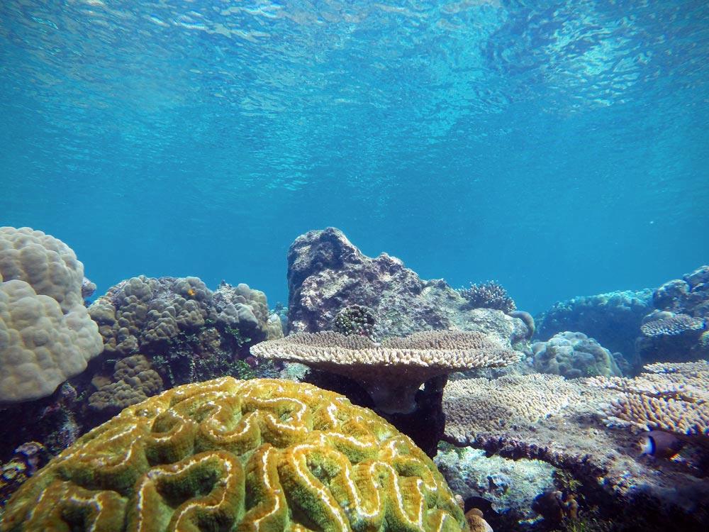 Corales. Buceo en Raja Ampat. Papúa. Indonesia.