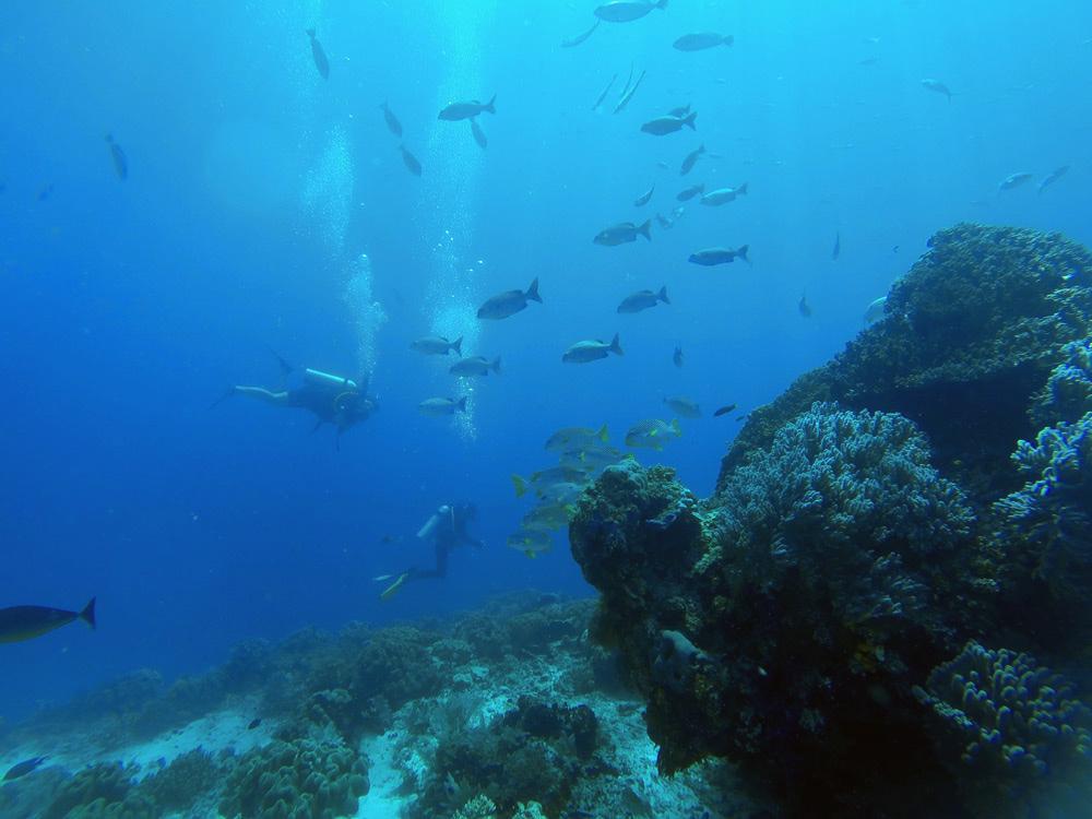Buceando en Raja. Cientos de peces, corales y moluscos. Buceo en Raja Ampat. Papúa. Indonesia.