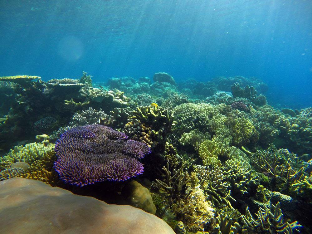 Corales de colores. Buceo en Raja Ampat. Papúa. Indonesia