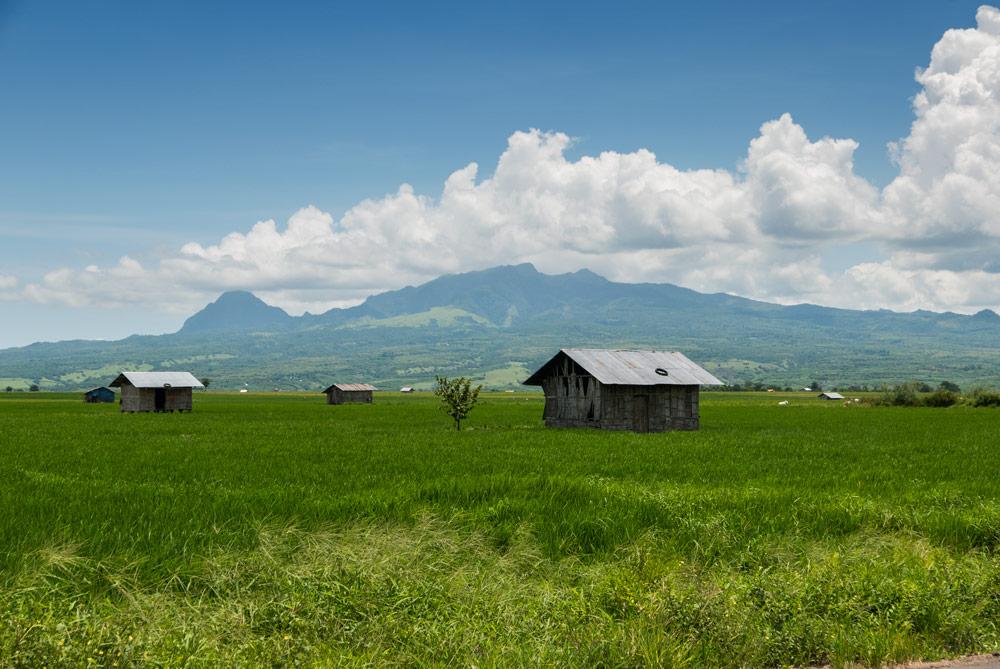 Campos de arroz en Lembor. Llamura llena de arroz y casitas de madera salpican la escena. RUTA ISLA DE FLORES. INDONESIA. VIAJE EN MOTO 5 ETAPAS