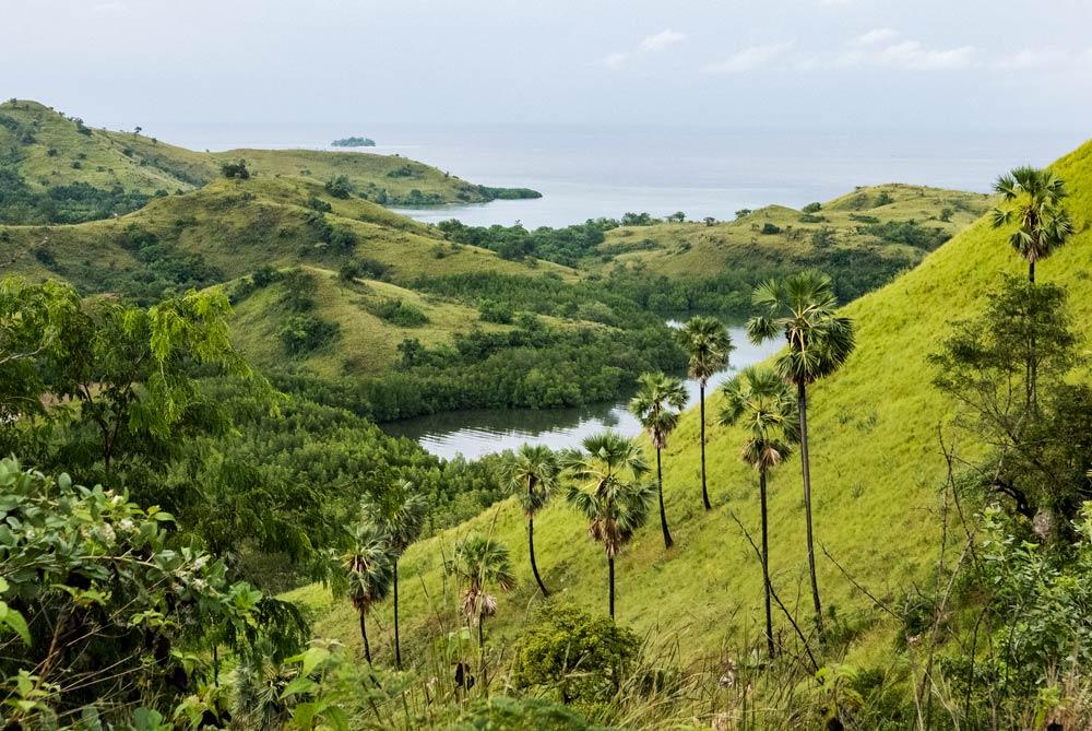 Verdes prados con las palmeras típicas de flores en primer termino. Laderas pronunciadas con el mar al fondo.RUTA ISLA DE FLORES. INDONESIA. VIAJE EN MOTO 5 ETAPAS