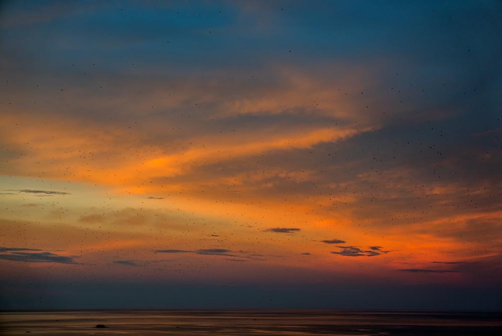 Una masa de miles de muercielagos cubren la puesta de sol en Riung. RUTA ISLA DE FLORES. INDONESIA. VIAJE EN MOTO 5 ETAPAS