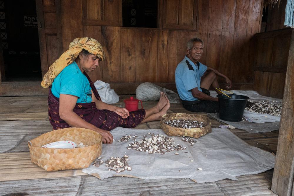 Dos ancianos extraen la nuez de Macadamia de su cáscara.