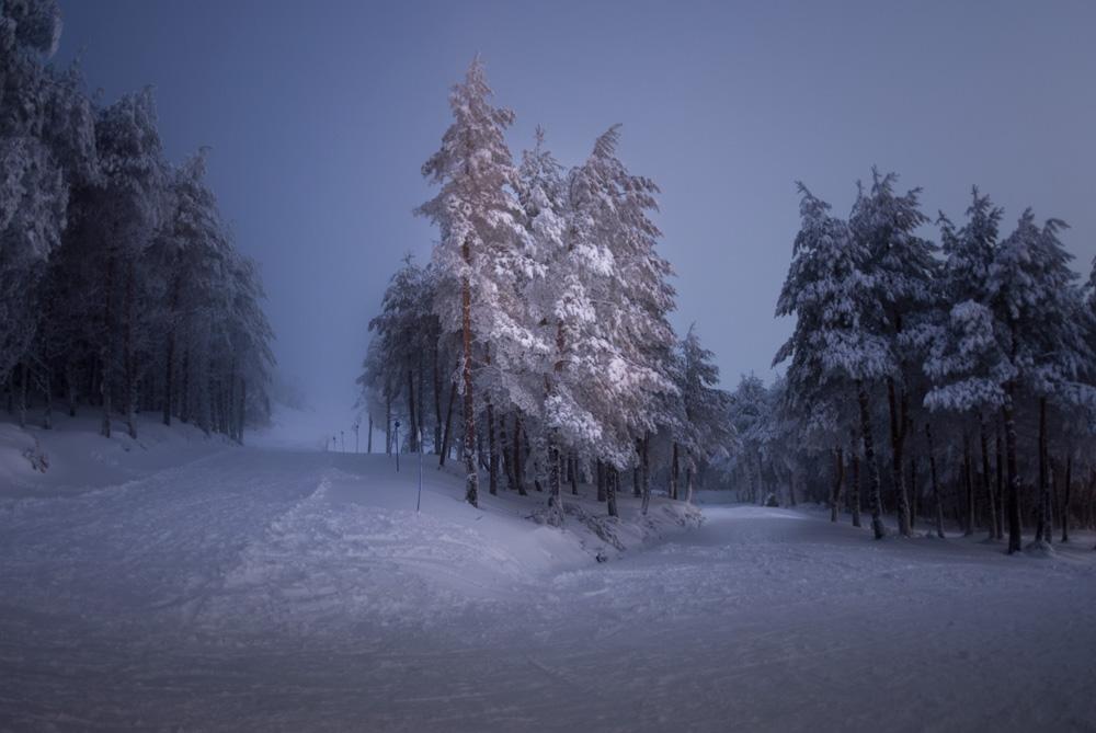 Paisaje noscturno de árboles nevados. Solo uno destaca por la luz de una farola. lugares donde disfrutar de la nieve en Galicia