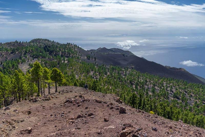 Miles de pinos coronan las laderas negras de las vistas desde las deseadas. Las Deseadas - Ruta de los Volcanes. Perder el Rumbo