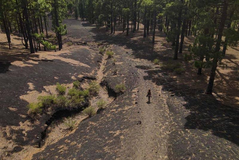 Llano de las Mantecas con un pernosa caminando por ellas, a cada lado bosque de pinos. Ruta de los Volcanes. Perder el Rumbo