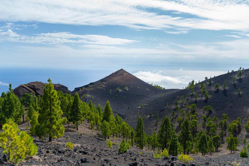 El Volcán San Martín al fondo con un bosuqe de pinos en primer término. Ruta de os Volcanes. Perder el Rumbo.