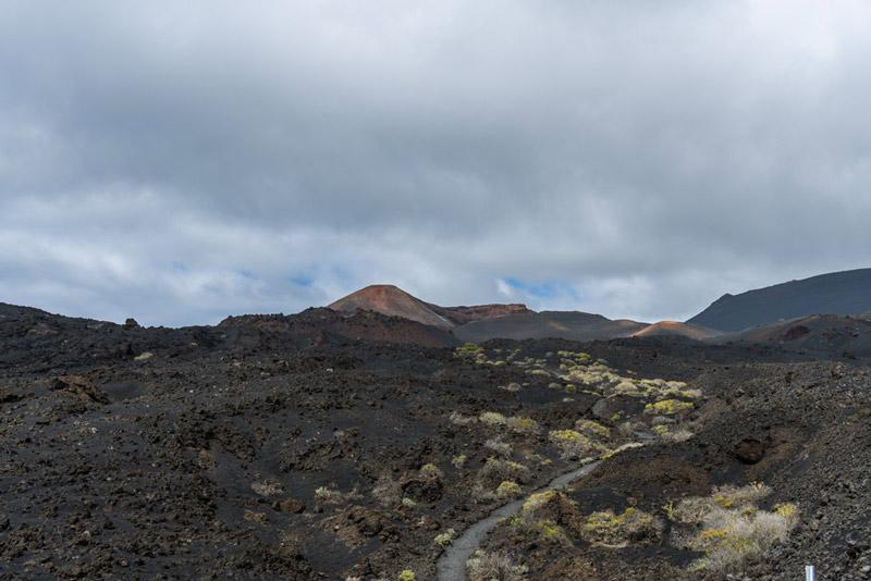 Plantas del Tijanaste bordean el sendero de ceniza volcánica con el Volcán de Teneguía al fondo. Ruta de los Volcanes. Perder e Rumbo.