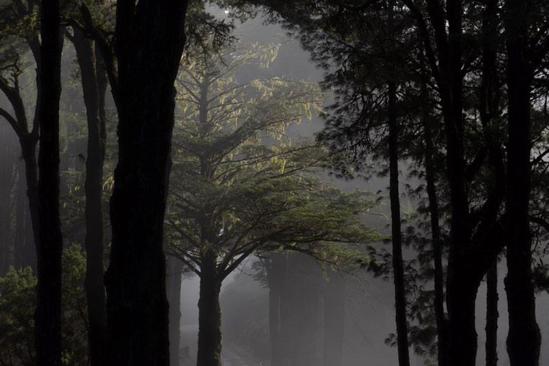 Niebla sobre los pinos de el Refugio del Pilar. Ruta de los Volcanes. Perder el Rumbo