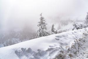 Pino rodeado de muchísima nieve, unos 50 centímetros. 10 casas rurales cerca de la nieve en Galicia. Hoteles en la montaña
