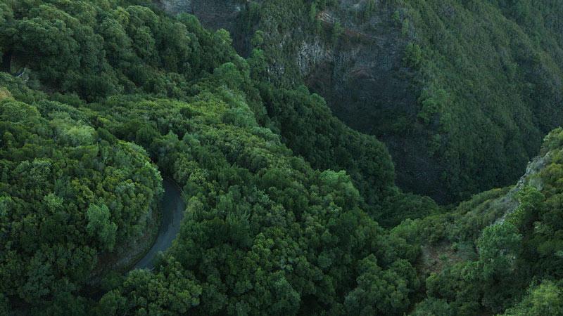 Vista aérea de un bosque con una sinuosa carretera que lo atraviesa. Perder el Rumbo