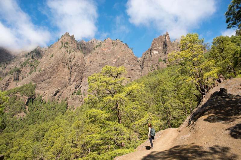 Arboles de pinos en la caldera de taburiente - Cosas que hacer en al isla de la Palma.Perder el rumbo