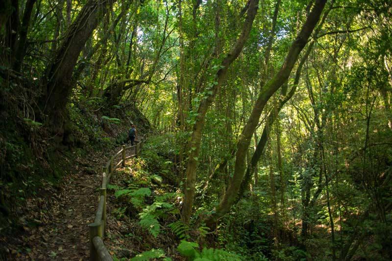 Paseando en un bosque de laurisilva - Perder el rumbo
