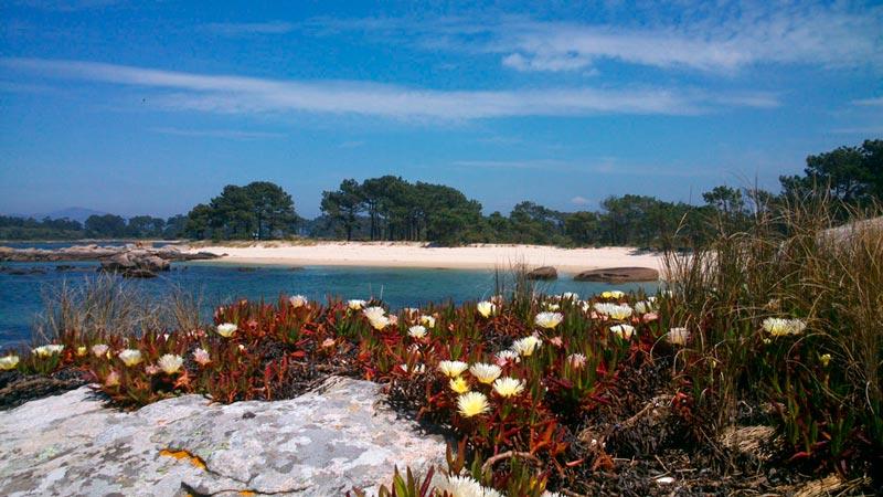 Preciosa vista de las playas de Carreirón con unas flores en primer término. 20 lugares que ver en Galicia imprescindibles. Perder el Rumbo