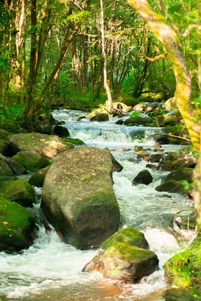 Riachuelo entre verdes árboles. 20 lugares que ver en Galicia imprescindibles. Perder el Rumbo