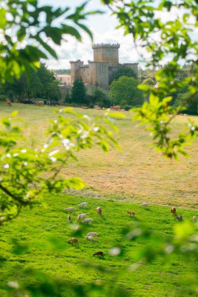 Castillo de Pambre vista entre tamas de los árboles. 20 lugares que ver en Galicia imprescindibles. Perder el Rumbo