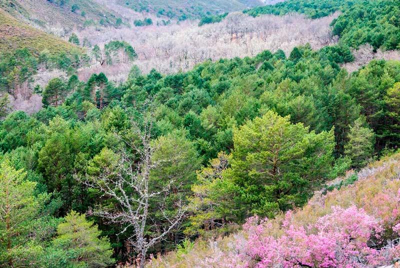 Frondosos árboles de varios colores en el Parque Natural de O Invernadeiro. 20 lugares que ver en Galicia imprescindibles. Perder el Rumbo