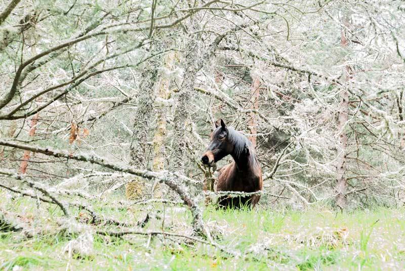 Caballo en O Invernadeiro entre las ramas de los árboles. 20 lugares que ver en Galicia imprescindibles. Perder el Rumbo