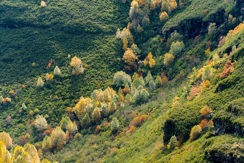árboles en la montaña de O Courel. Vista aérea que hace que parezcan miniaturas. 20 lugares que ver en Galicia imprescindibles. Perder el Rumbo