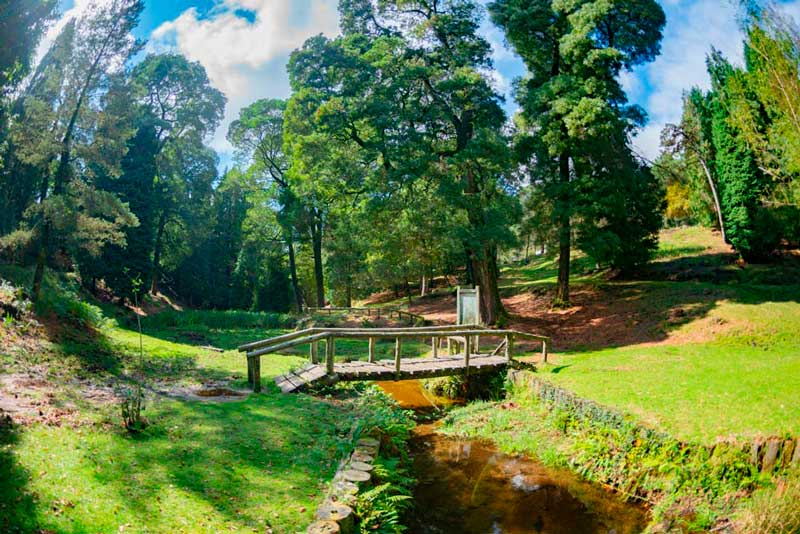 Parque natural de Monte Aloia donde se ve un puente de madera rodeado de vegetación. 20 lugares que ver en Galicia imprescindibles. Perder el Rumbo
