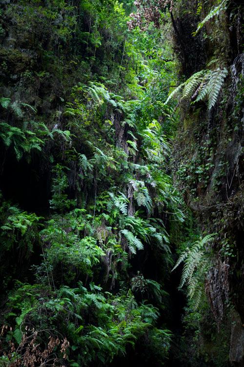 Vegetación barrancos bosque de los Tilos