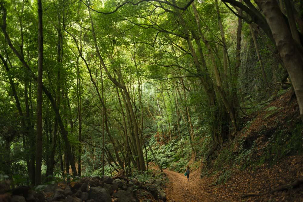 Bosque de los Tilos, paseando entre helechos .