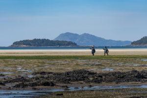 Dos mariscadoras andan por el arenal con sus rastrillo para la captura de almejas y berberechos. 10 motivos para visitar Noia, una villa medieval en la Ría da Estrela