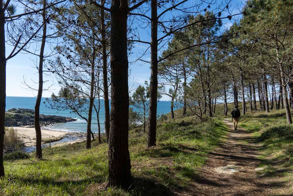 Paseo de pinos que lleva a una playa con aguas de intenso color azul. 10 bonitas playas de Porto do Son en Noia