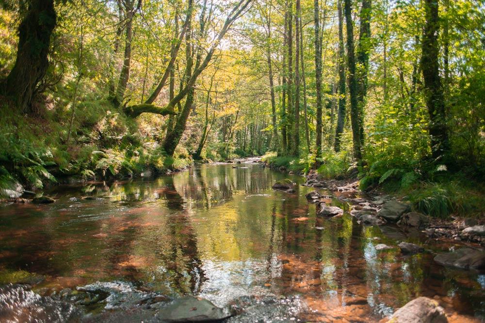 Río rodeado de árboles con colores otoñales. 5 Rutas de otoño en Galicia. Perder el Rumbo